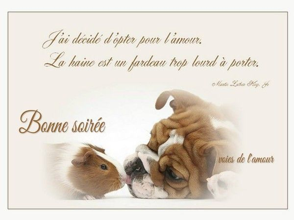 """Préférence Bonne soirée """" - Bulldog et cobaye avec citation  ZG15"""