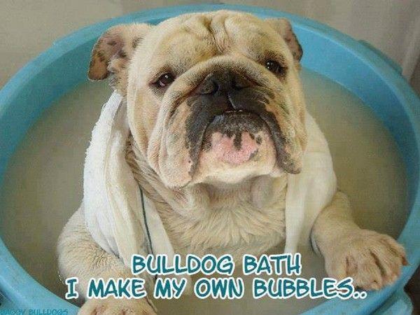 Bulldog bath i make my own bubbles for Create my own bathroom