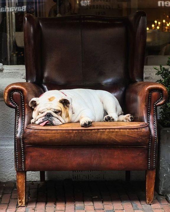 Parfait pour ma sieste ce fauteuil for Fauteuil de sieste