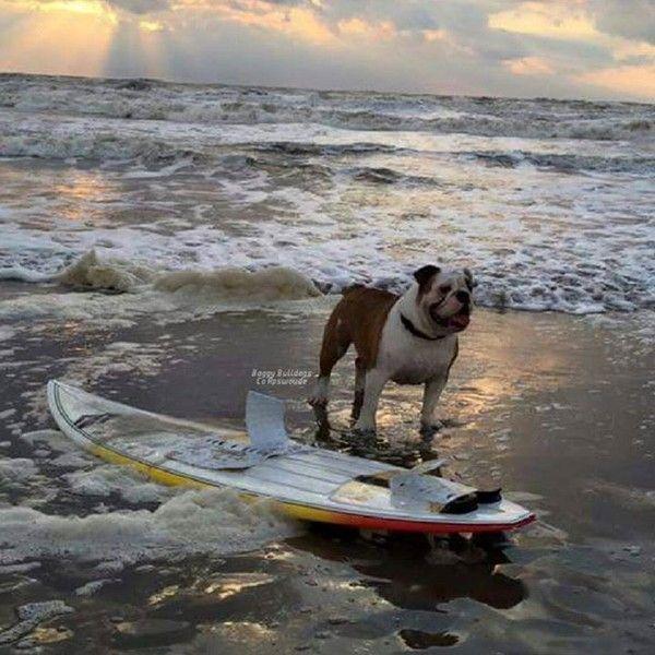 Pourquoi pas un peu de surf au coucher du soleil centerblog - Pourquoi un coup de soleil gratte ...