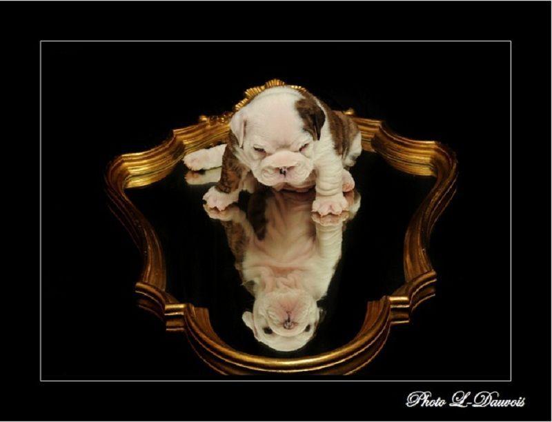 Par laurent dauvois miroir mon beau miroir for Laurent voulzy le miroir